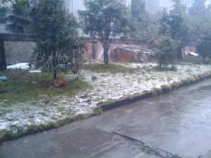 snow2009
